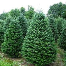 make your decoration easy this year with tradition trees