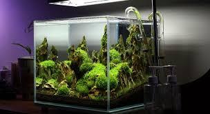 nano aquascape nano aquarium this aquascape could have been john pinius nano