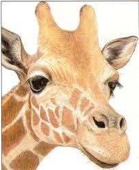 pix for u003e colorful giraffe drawing giraffes pinterest