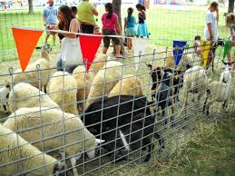chicago party rentals best 25 petting zoo rental ideas on petting zoo pony