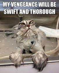 Revenge Memes - we cat revenge meme slapcaption com dog memes pinterest