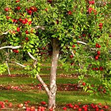 high quality products for growing trees and fruit growing things