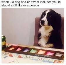Border Collie Meme - memes about dogs are excited you re home 28 photos thechive