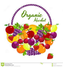 organic fruit basket organic market colorful vector poster design stock vector image