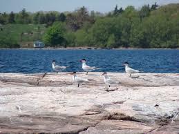 clayton ny rocks u0026 shoals thousand islands land trust