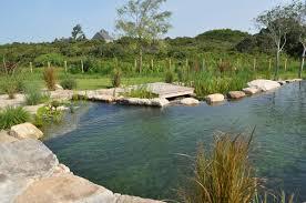 Backyard Swimming Ponds - swimming pool natural swimming pond with beautiful view creative