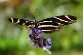 butterflies u0026 blooms conservatory of flowers