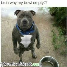 Funny Ifunny Memes - 20 most funny memes and funny pictures downloadfeast