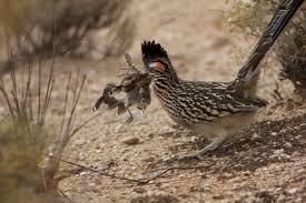 Arizona wildlife images 20 photos of wildlife in arizona that will drop your jaw jpg