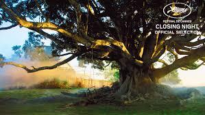 memento international the tree