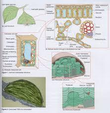 photosynthesis 2 9 8 3 hl john osborne u0027s teaching u0026 learning