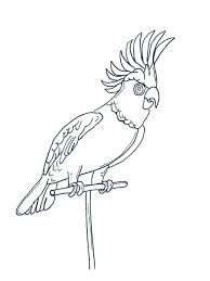 parrot coloring pages download and print parrot coloring pages