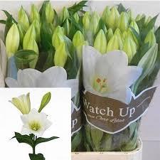 Wholesale Flowers Online Buy Lily Longi Wholesale Flowers Online Wedding Flowers
