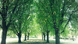 cool trees cool green shade free photo on pixabay
