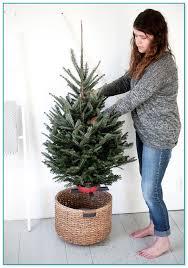 tree set up service
