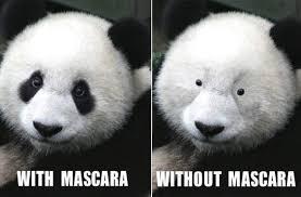 Panda Meme - 15 incredibly funny panda memes i can has cheezburger