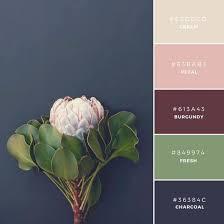canva color palette ideas various colour palette combinations vevu net