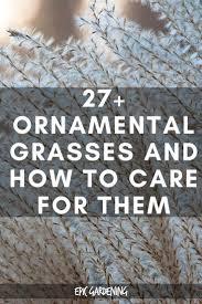 31 best ornamental grasses images on gardening