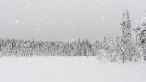 winter snowstorm with floating snowflakes falling on a forested
