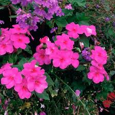 best 25 plants for hanging baskets ideas on pinterest flowers