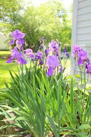 194 best gardening images on pinterest outdoor gardens backyard