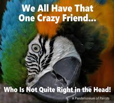 Crazy Friends Meme - we all have that one crazy friend who is not quite right in the