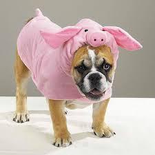 funny dog halloween costumes san francisco halloween pub crawl