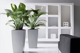 plante verte bureau offres location plantes vertes bureaux bac gris bureau votre