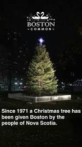 tree for boston treeforboston twitter