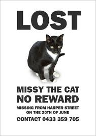 Lost Cat Meme - yeah thats not what i was looking for at all