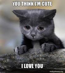 I Think I Love You Meme - you think i m cute i love you confession cat make a meme