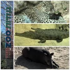 Tisch Family Zoological Gardens - tisch family zoo dogdaz
