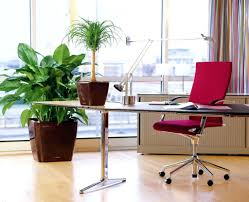 Plant For Desk Office Design Feng Shui Office Cubicle Layout Feng Shui Bamboo