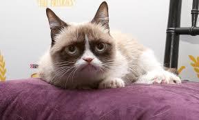Grumpy Cat Meme Creator - 16 fun facts about grumpy cat mental floss