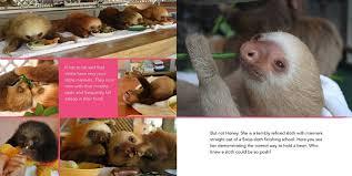 not just sloths baby sloths i kristen bell has some kleenex