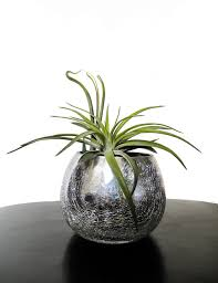 Air Plants Air Plants Care And Display Creative Plant Designs