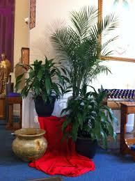 palm sunday palms for sale 155 best palm sunday images on palm sunday church