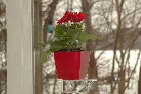self watering planter 5