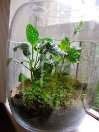 at 2 how to host a terrarium making party