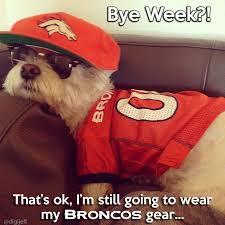 Go Broncos Meme - bye week for broncos sports lol pinterest denver broncos memes
