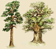 pine and oak trees painted in vintage manner isolated on buff