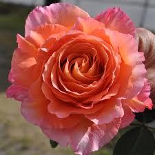 Bulk Flowers Bulk Flowers Wholesale Flower Shop In Dc Area Roses Wedding