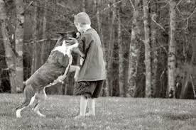 boxer dog breeders near me tysadie u0027s boxers and bulldogs barre ma