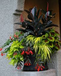 Container Gardening Flowers Container Gardening Archives Gardening Senses