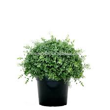 Artificial Boxwood Topiary Trees Artificial Boxwood Ball Tree Artificial Boxwood Ball Tree