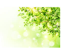 sunlight with green tree background welovesolo