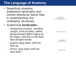 Picture Of Anatomical Position Chapter 1 Lecture Frederic Martini Michael Timmons Robert