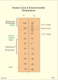 Comfortable Temperature For Newborn New Human Physiology Ch 21