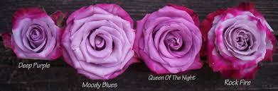 different shades of purple names the lavender purple rose study flirty fleurs the florist blog