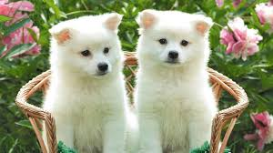 cute dog wallpapers entertainment only